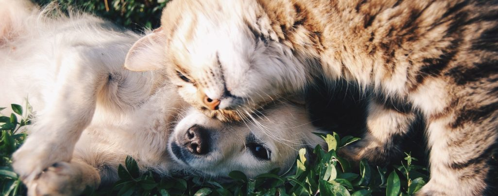 Il nostro primo post: perché questo blog (e la decisione di occuparci di cremazione animali)!