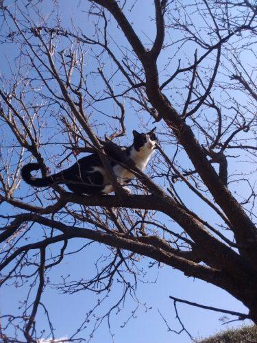 Contro la depressione manda il gatto in palestra.....