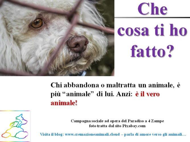 #NONABBANDONARMI - Chi abbandona gli animali è il vero animale!