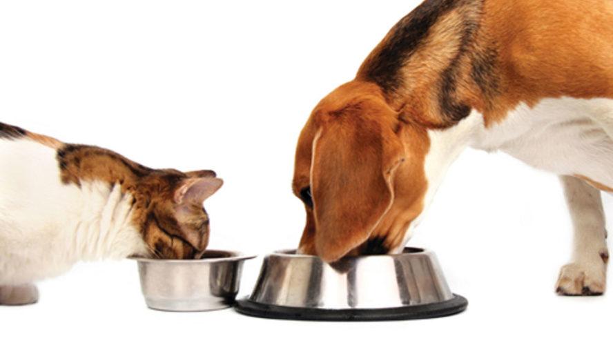 Con il caldo è meglio il cibo umido o secco?
