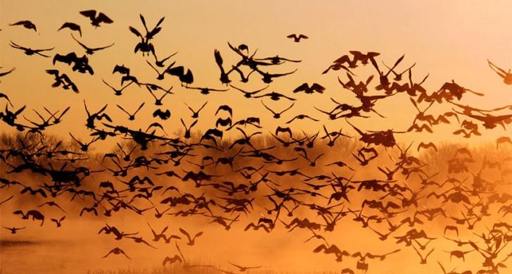 Emergenza ambiente: le associazioni chiedono lo stop alla caccia!