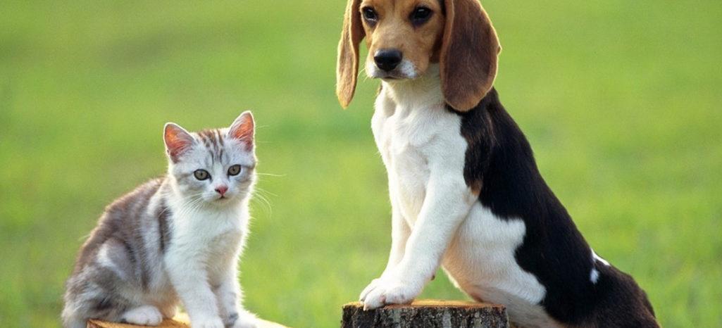 Come adottare un cane (o un gatto)!