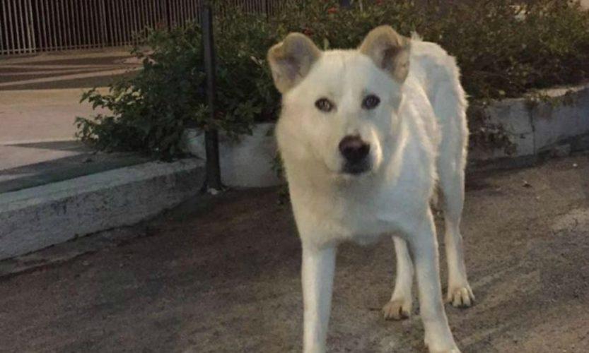 La triste storia del cane Angelo: condannati i 4 aguzzini!
