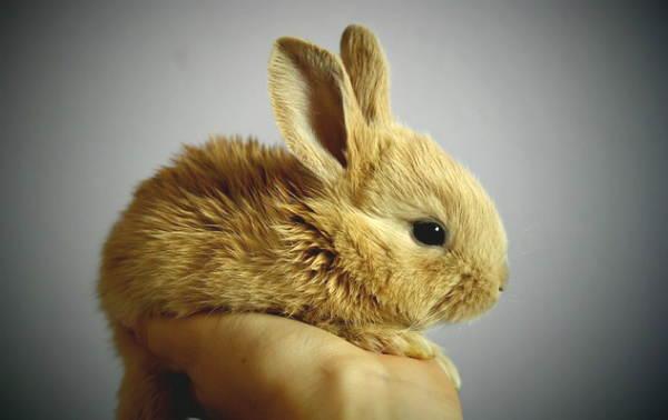 Sta per arrivare un coniglio!