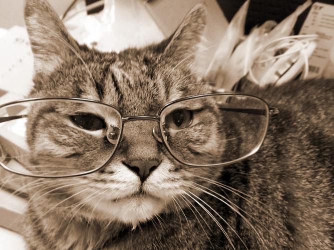 """Sapevi che """"nonno gatto"""" mangia di meno ed è meno attivo fisicamente?"""