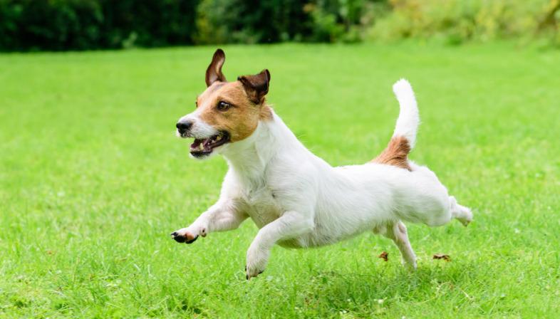 Il tuo cane ha problemi di cuore?