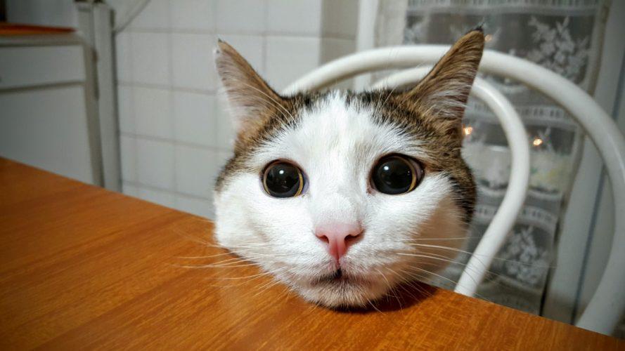"""Gatti e """"umani"""": le malattie... comuni!"""
