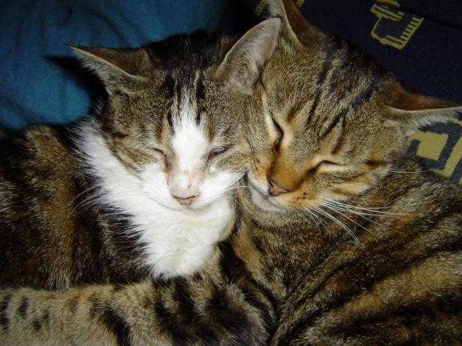 I tuoi gatti si vogliono bene? Scoprilo leggendo il post...