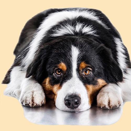 Cani: reni ko? Servono gli acidi grassi...