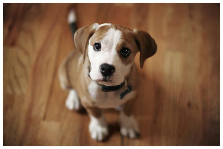 Problemi di asma? Prova a prendere un cane in casa...