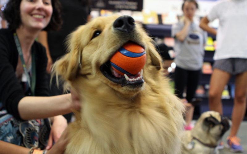 Cani eroi: lo show di Trainer...