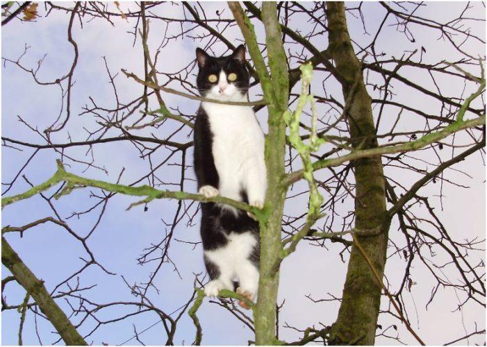 Gatti: maestri di arrampicata!