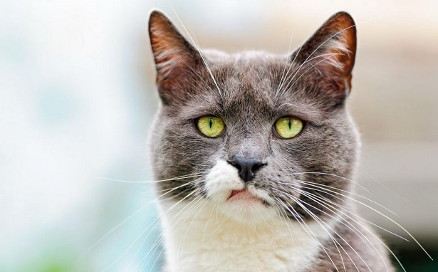 La dieta per il gatto che ha mal di pancia...