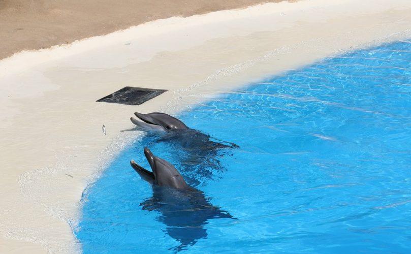 Delfini e Pet Therapy: tentativo di aggirare le leggi?