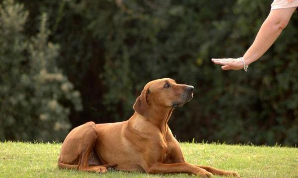 """Come """"parla"""" il cane? Un ricco dizionario per capirlo davvero!"""