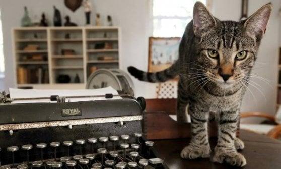 Uragano Irma: salvi i gatti di Hemingway!