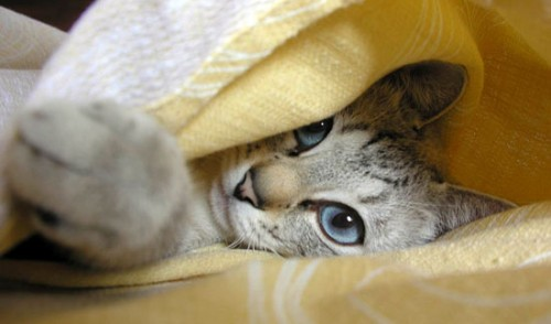 """Lo conosci davvero? Ecco la """"Guida al gatto""""..."""