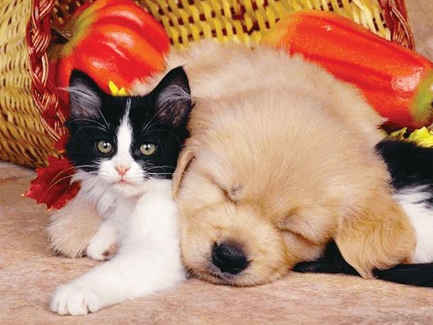 """I consigli dell'esperta: fai """"digerire"""" al gatto l'arrivo di un cagnolino!"""