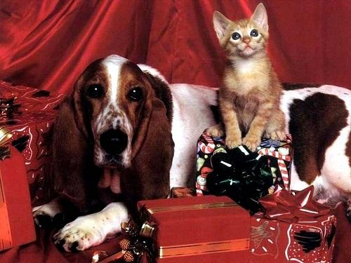 Auguri di Natale dai vostri amici a quattro zampe!