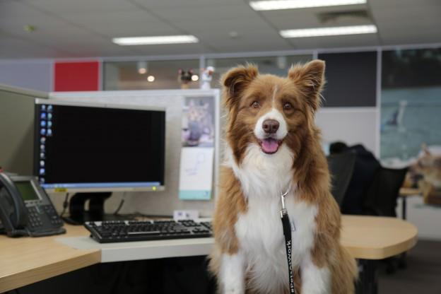 Pets at Work: al lavoro con gli amici!