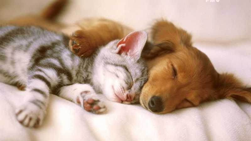 Gatto e cane si odiano?