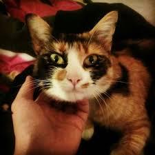 Estrema urgenza per Minnie: gattina epilettica senza una casa...