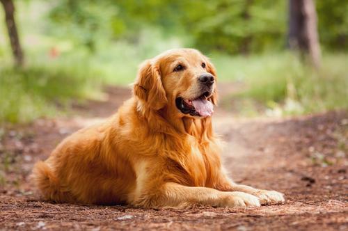 Animali: i cani sono più intelligenti dei gatti!