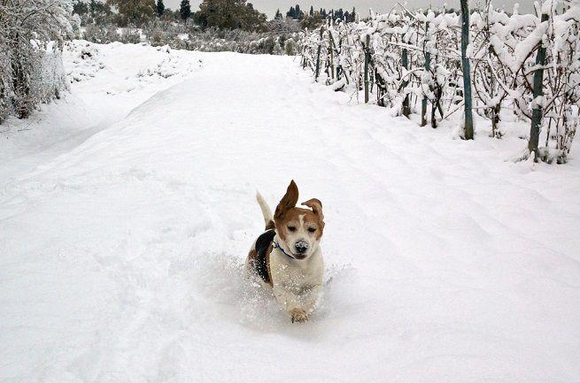 Corse e salti nella neve (occhio ai nostri amici a 4 zampe)!