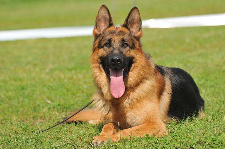 Condannato per maltrattamenti: aveva preso a calci e pugni il suo cane!