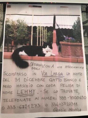 Annuncio: perso splendido gatto a Ortonovo (La Spezia - Liguria)...