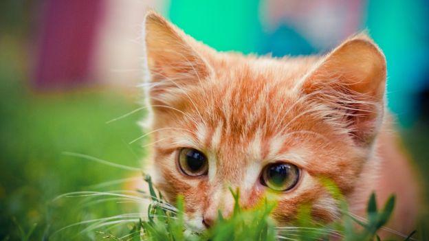 Il tuo gatto vuole giocare? Capiscilo da questi segnali...