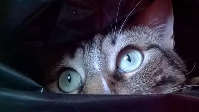 Quando i gatti vedono i fantasmi...