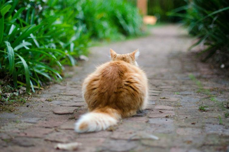 Gatti: come tornare in forma?
