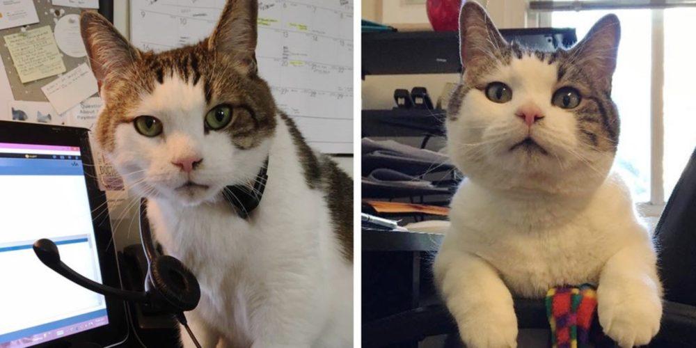 Il micio che salva vite: è Sparky, l'assistente veterinario!