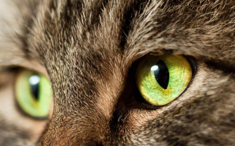 Gatti, anche i suoi occhi soffrono il freddo!