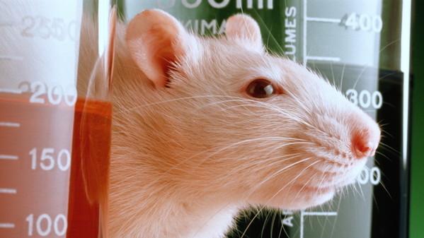 Sperimentazione: in Inghilterra è senza animali!