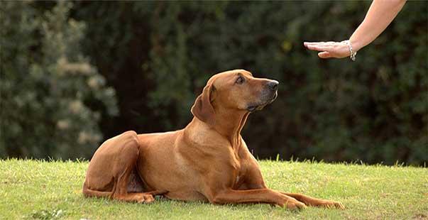 """Educare il cane: il comando """"no""""!"""