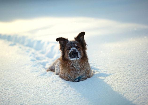Il tuo cane ama la neve? Occhio, è buona ma insidiosa!