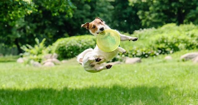 Quando la cucciola è iperattiva: risponde il veterinario dottor Pietro Bianchi!