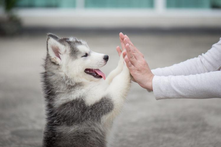 I consigli dell'esperto: insegna al cucciolo a non sporcare in casa!