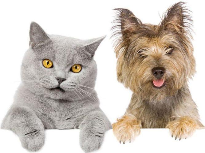 Cani e gatti: se soffrono, ce lo fanno capire. Così!