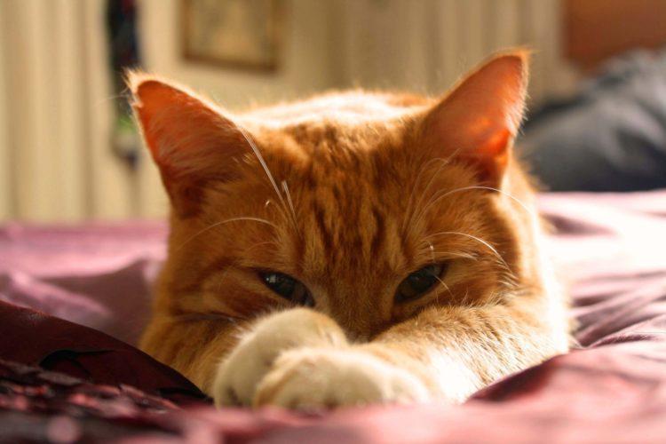 La nuova dieta del gatto (risponde il dottor Piero Bianchi, veterinario)!