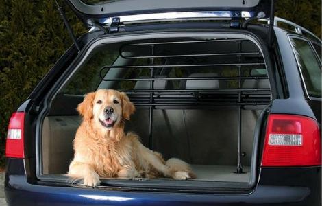 Devo fare un lungo viaggio con il mio cane. Vorrei partire in macchina, ma lei che cosa mi consiglia?