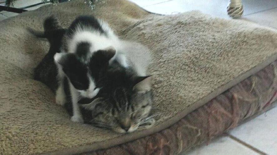 La gatta va a spasso e torna con un micino...