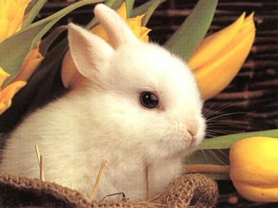Solo fieno per i denti del coniglietto...