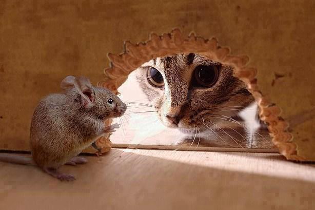 Roberta e il topino...