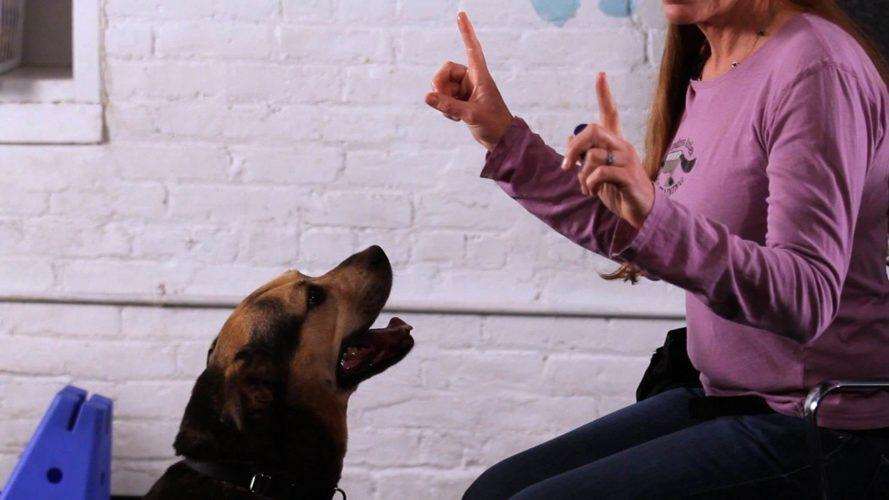 I consigli dell'esperta: le regole per parlare al cane!