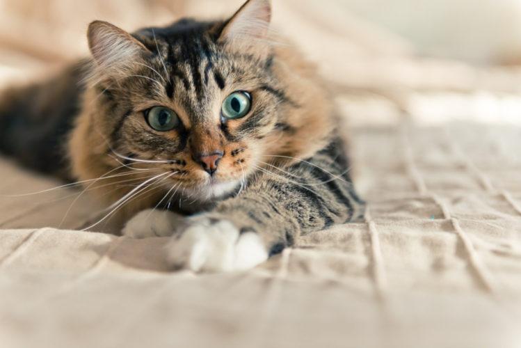 Un amico a quattro zampe di nome gatto? Ecco come sceglierlo...