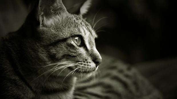 """Alla scoperta di quel misterioso """"amico"""" a quattro zampe di nome gatto!"""