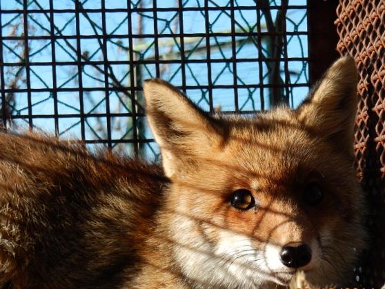 Animali da pelliccia: la Norvegia dice basta!